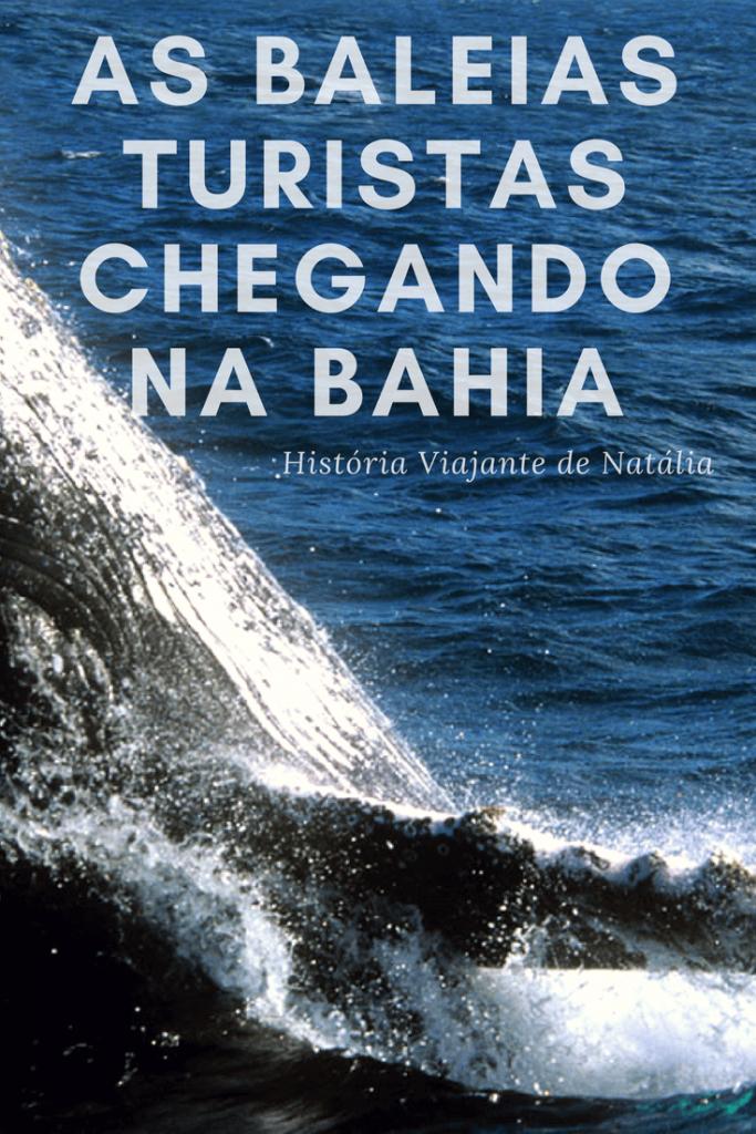 História viajante: as baleias turistas