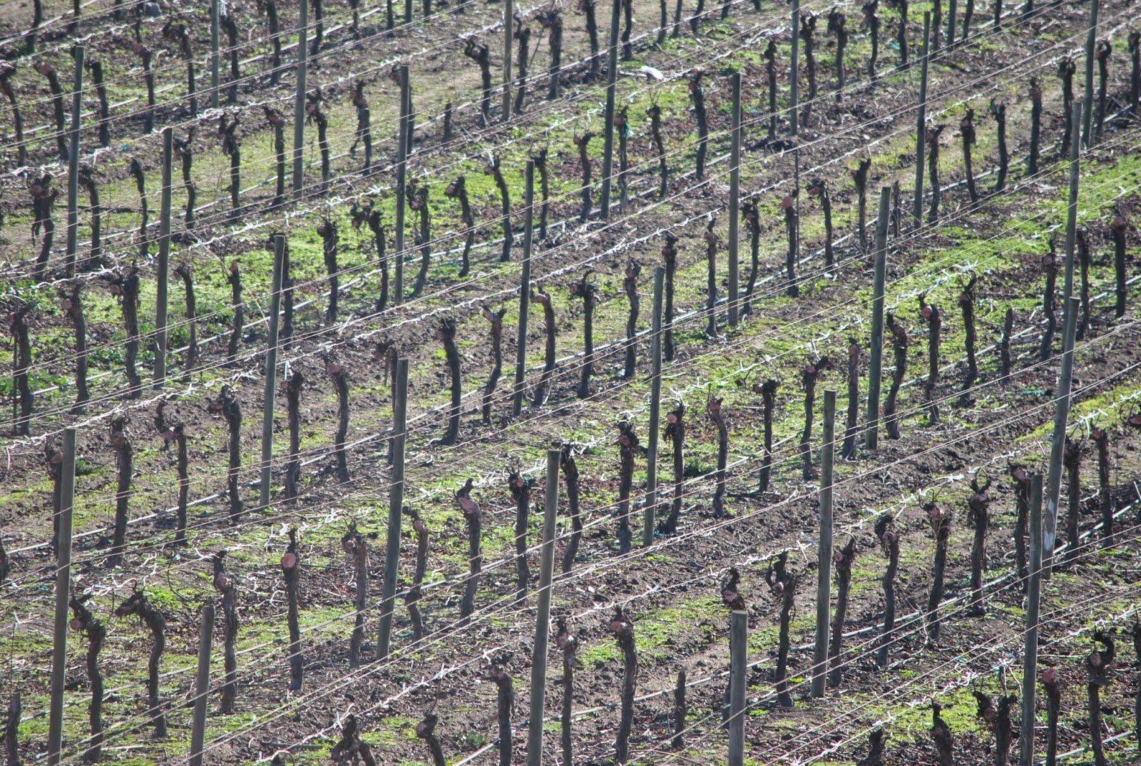 Chile: conhecendo as Vinícolas por Santiago
