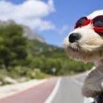 Viajando com o seu animal de estimação