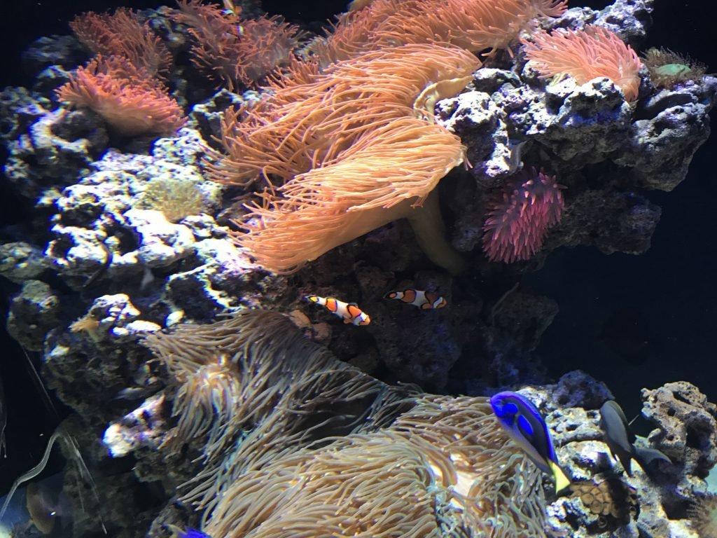 Oceanário de Lisboa - Nemo e Dori... amor eterno!!!