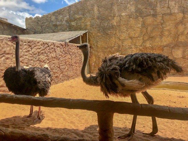 Avestruz - aquário e zoológico - city tour em Natal