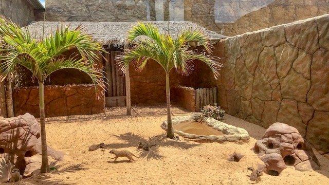 Suricatos - Aquário e Zoológico de Natal