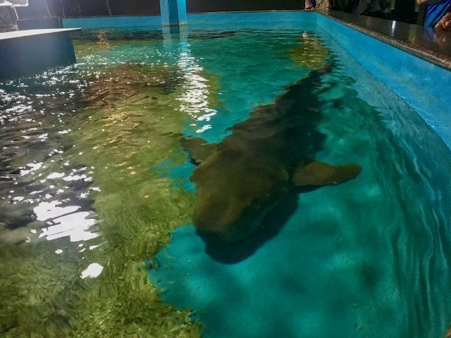 Tubarão no Aquário - city tour em Natal