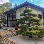Dicas de 3 lugares para curtir a cultura japonesa em São Paulo