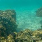 Um mergulho nas Galés de Maragogi/AL, que tal?