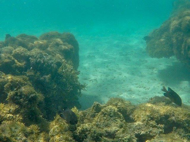 Corais E Peixinhos Nas Gales