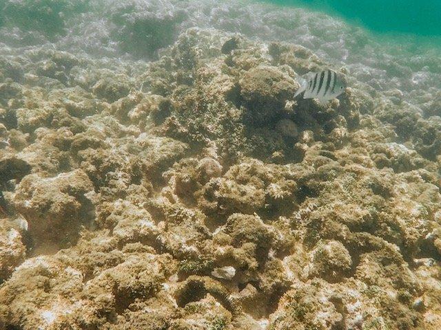 Corais Galés De Maragogi