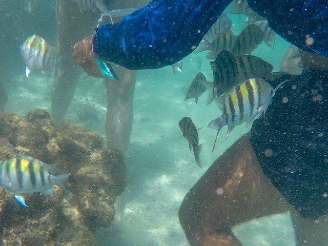 Peixes E Fotógrafo