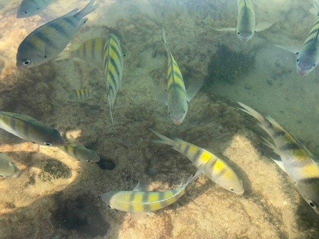 Peixinhos Nas Piscinas Naturais
